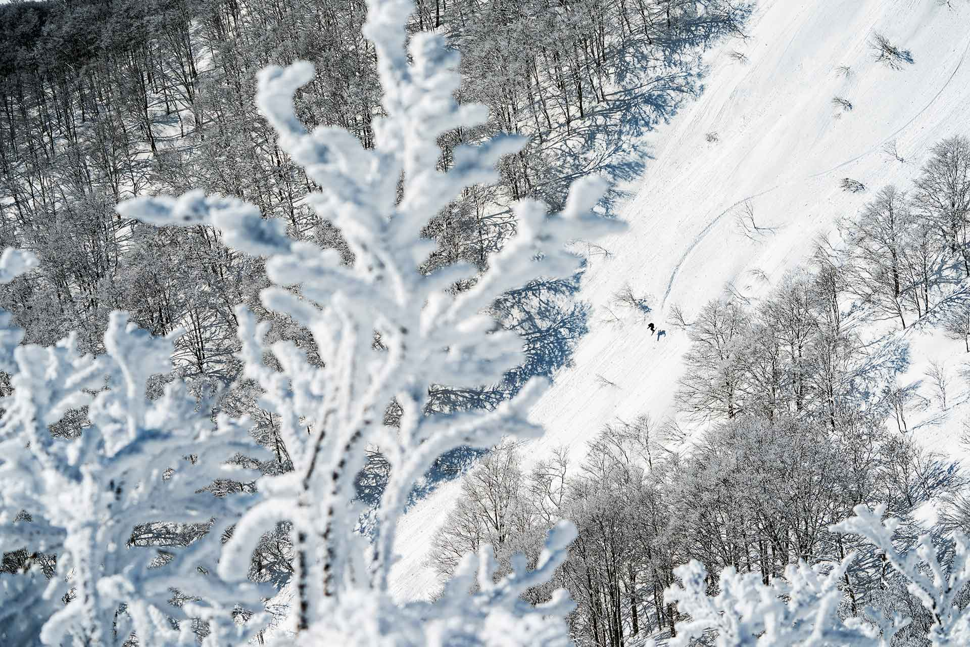 Thrilling side-country wide open terrain accessible via ski lifts
